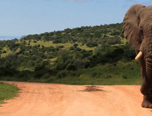 Addo Family Safari Holiday Special