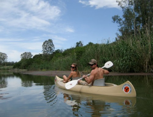 Addo River Safari