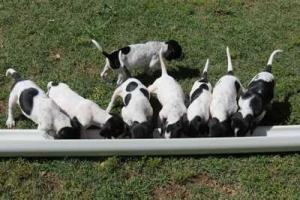 wJemma's puppies 002