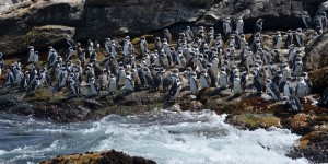See-the-penguins-in-PE