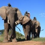 addo-elephant-back-safaris