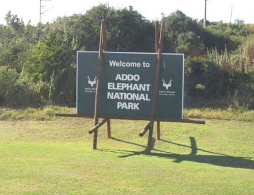 Addo Elephant National Park: Proof Of Identification & Gate Access