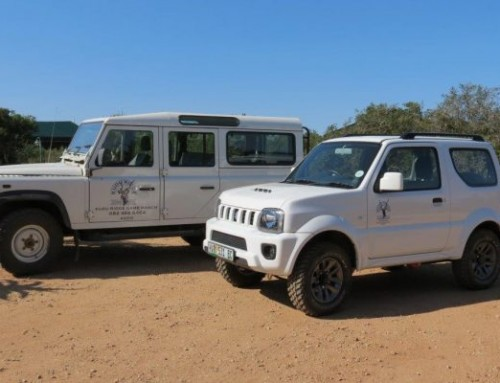 Addo Activity: 4×4 Tours