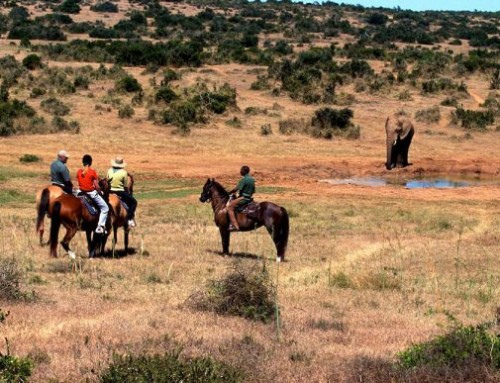 Addo Adventure Activity: Horseback Safaris