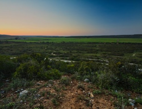 Addo Accommodation Special: Early Bird 30% Discount