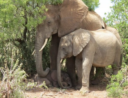 Top 5 Reasons to Visit Addo in Autumn