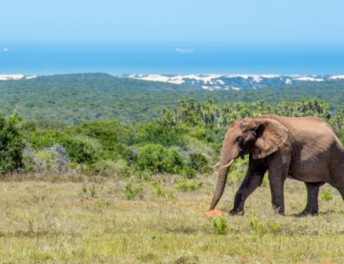5 Facts About Addo Elephant National Park