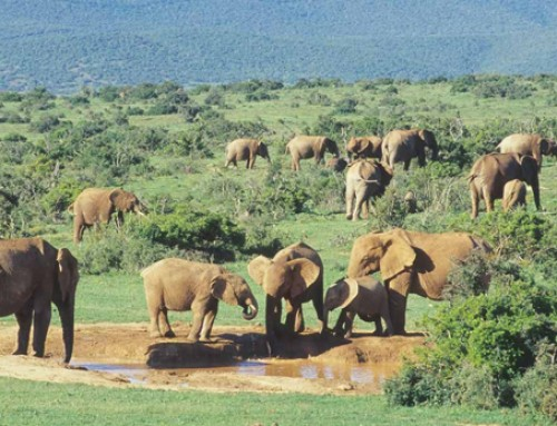 Addo Safari Lodge: Winter Accommodation Special