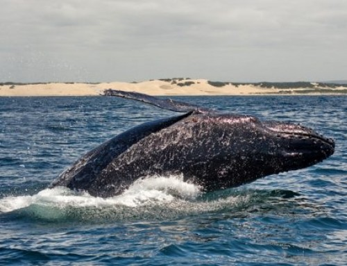 Whale Watching and Addo Safaris